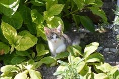 cat-2464452_960_720