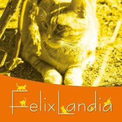 L'Oasi di Felixlandia – Associazione Onlus Animalista