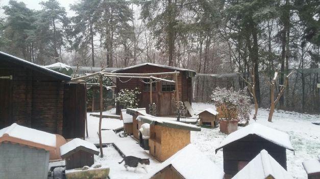 oasi inverno