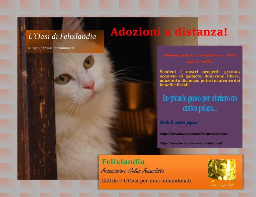 locandina per domenica novembre 2 pdf