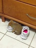 12-canino-dorme-o-svenuto