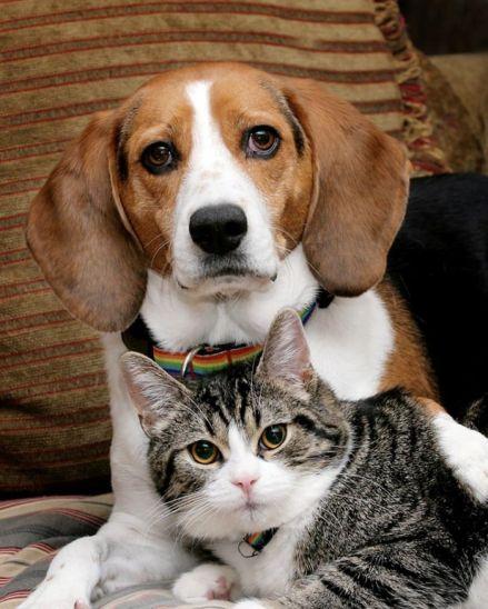 cane-e-gatto-insieme-10