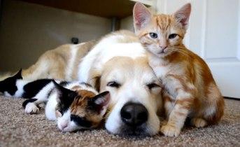 gattini-e-cane